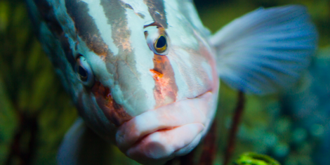 Fish on antidepressants Prozac, Zoloft, Tegretol, become anxious, antisocial and aggressive