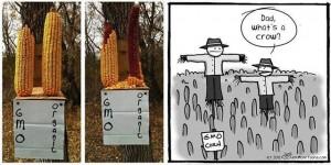 NO Post 3 pesticides GMOvsconventional