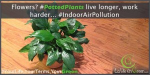 Well cared for potted plants live longer and help lower indoor air pollution