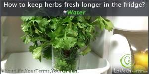 Tips to keep Fresh Herbs longer in your Fridge