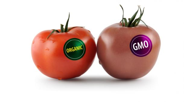 Organic vs GMO tomatoes or the need to label GMOs