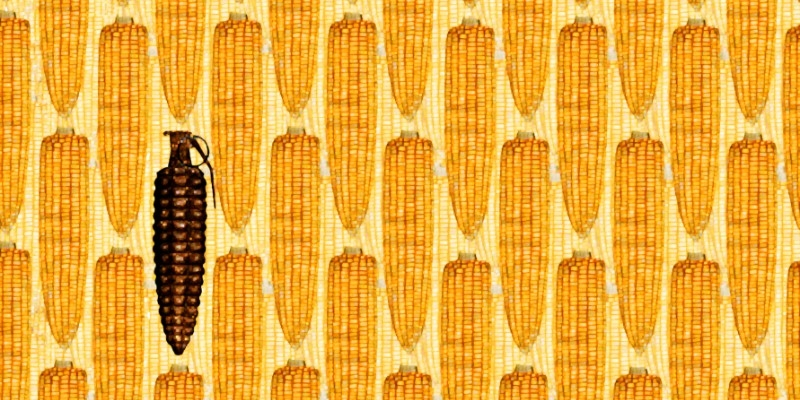 Monsanto Syngenta Dow Dupont GMO GE corn